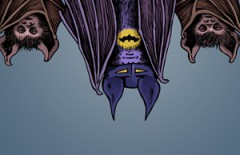 The Bat Fan thumbnail